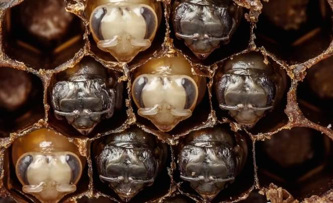 bee-time-lapse.jpg.662x0_q70_crop-scale